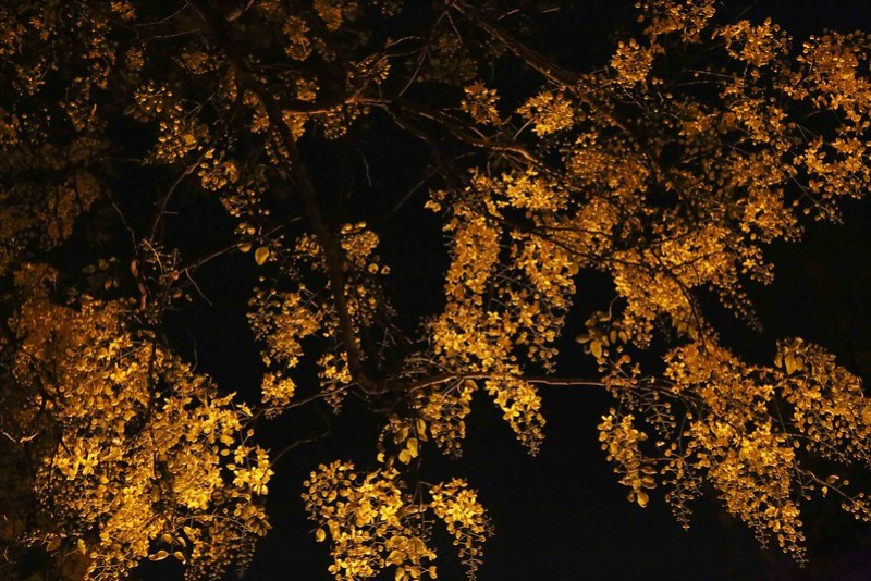 100 Things to Do Before You Quit Delhi – Stand Under Amaltas Trees at Midnight, Around Town