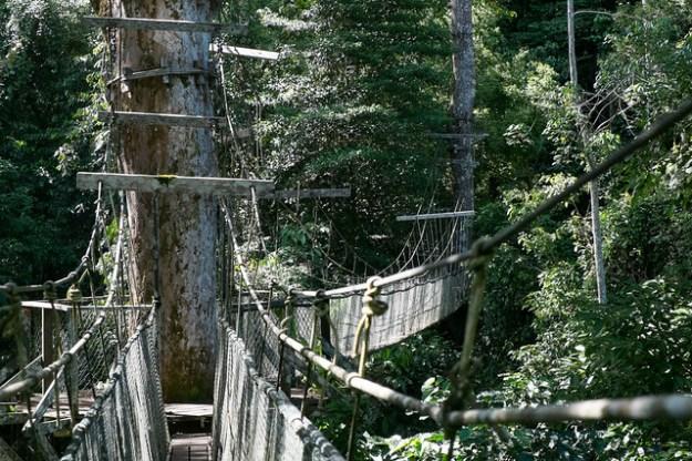 Canopy walkway. Gunung Mulu