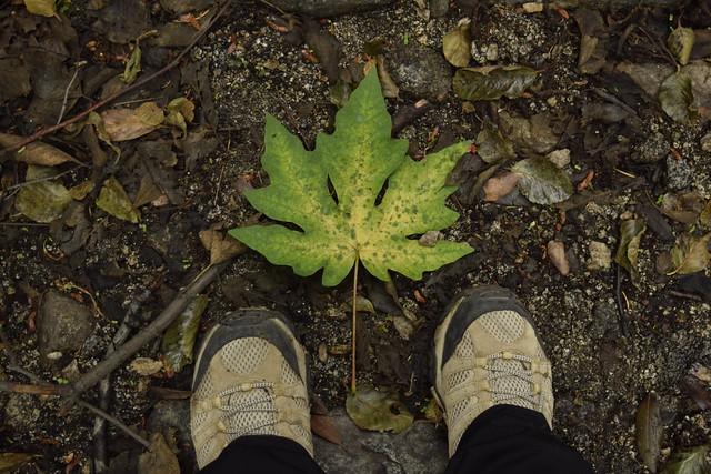 leaf_sprucegrove