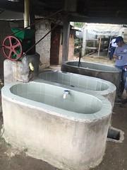 Finca La Esperanza, farmer Edilfonso Yara, Gigante, Huila, Colombia