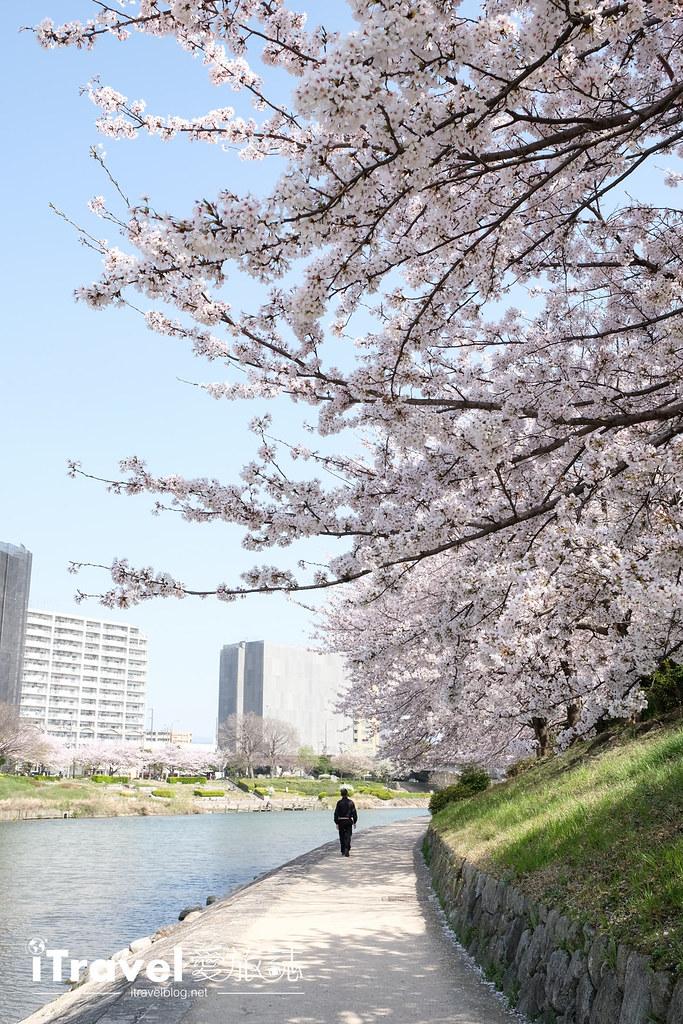 福岡賞櫻景點 美野島南公園 (54)