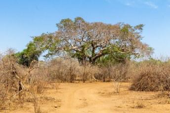 We reden nog niet meteen het nationale park in, maar bleven in de omgeving van onze lodge.