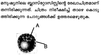 Plus Two Zoology Model Question Papers Paper 2.10