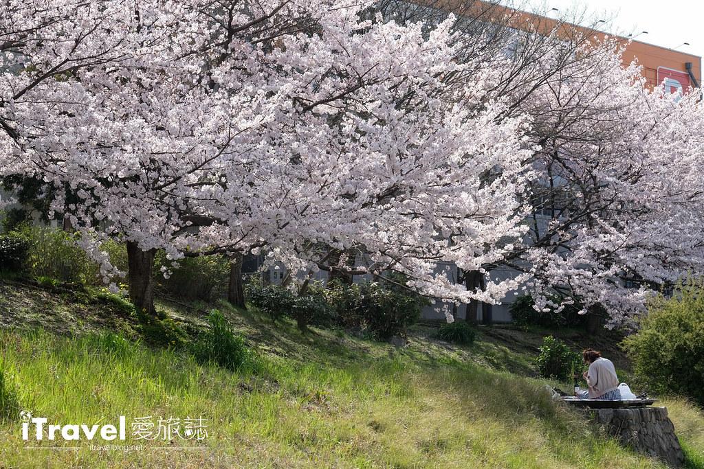 福岡賞櫻景點 美野島南公園 (55)