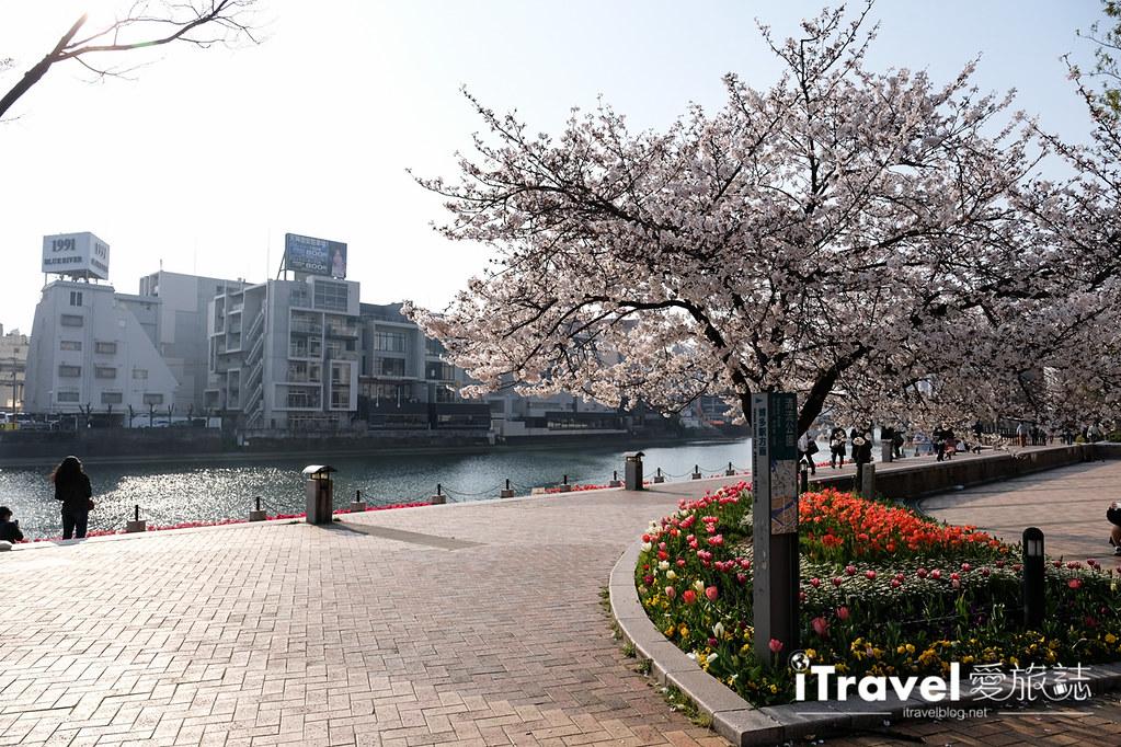 福岡賞櫻景點 博多清流公園 (27)