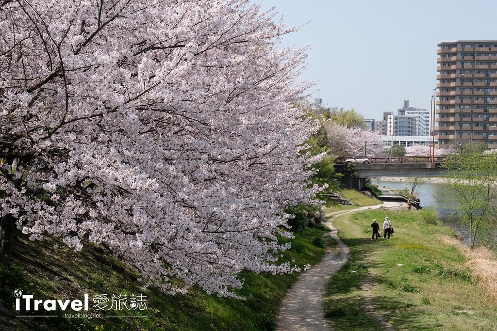 福岡賞櫻景點 美野島南公園 (19)