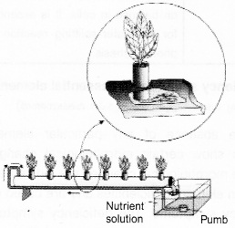 Plus One Botany Notes Chapter 8 Mineral Nutrition