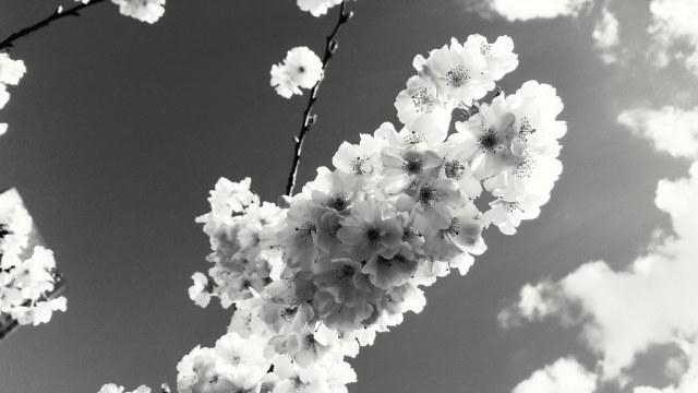 Fleurs et nuages à La Défense