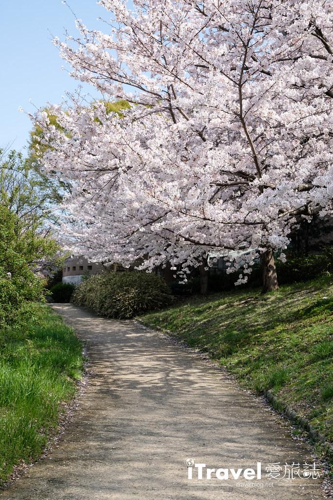 福岡賞櫻景點 美野島南公園 (57)