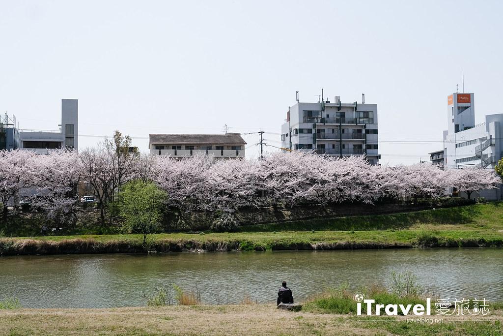 福岡賞櫻景點 美野島南公園 (8)