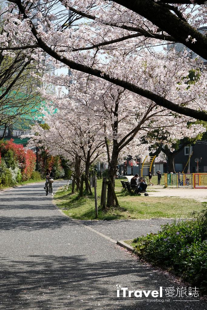 福岡賞櫻景點 美野島公園、東領公園 (20)