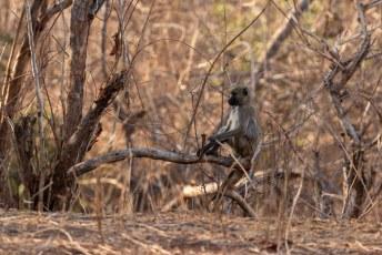 Het laatste dier dat we tijdens onze eerste safari zagen was deze gele baviaan.