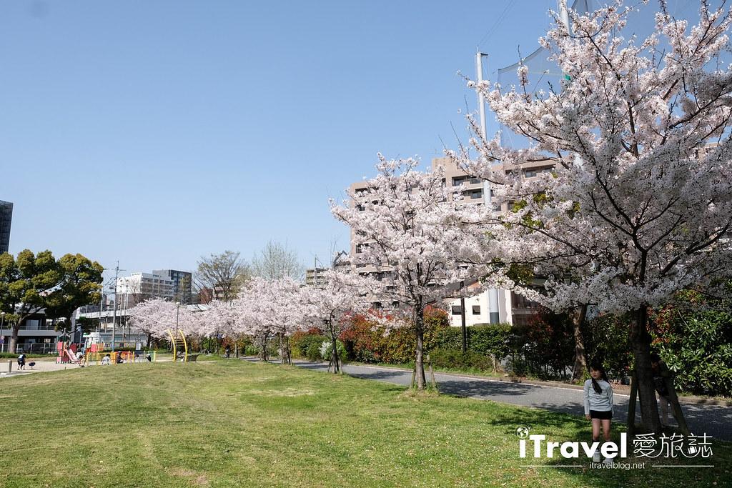 福岡賞櫻景點 美野島公園、東領公園 (11)