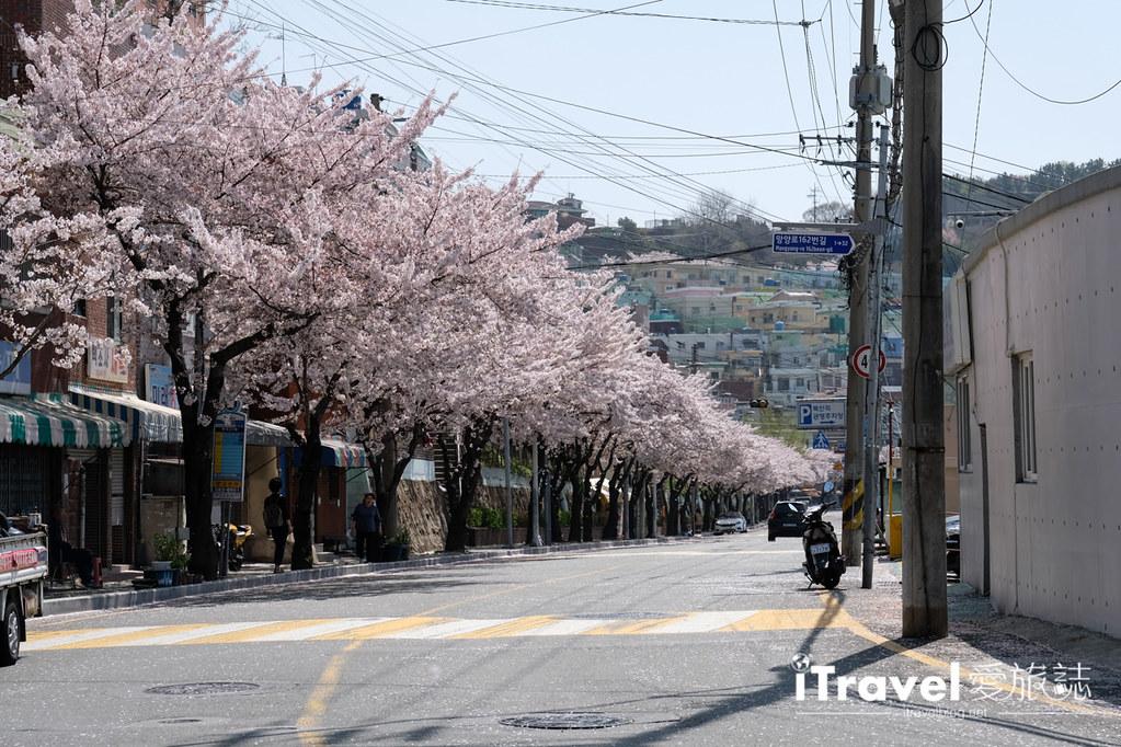 釜山賞櫻景點 東大新洞望洋路 (23)