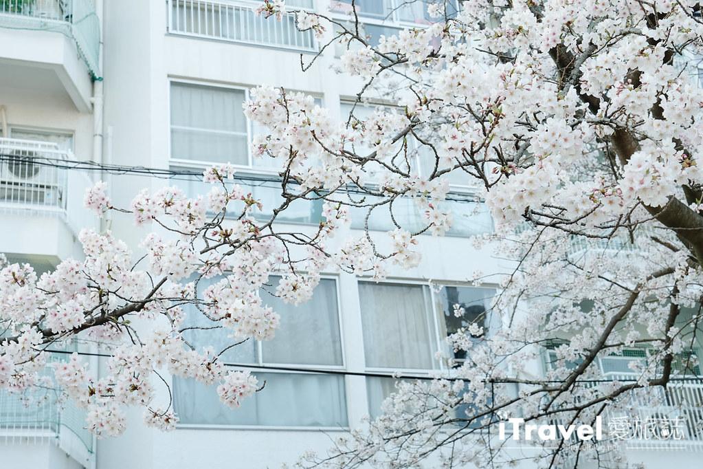 福岡賞櫻景點 西公園Nishi Park (9)