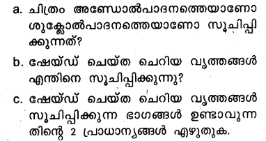 Plus Two Zoology Model Question Papers Paper 5.26