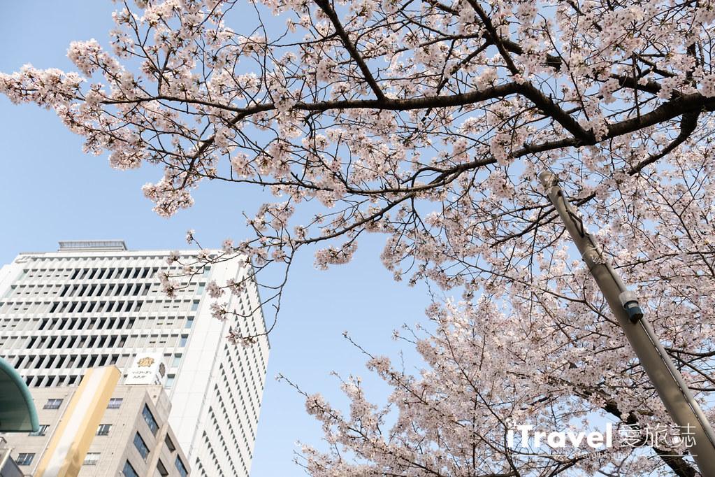 福岡賞櫻景點 福岡城 (5)