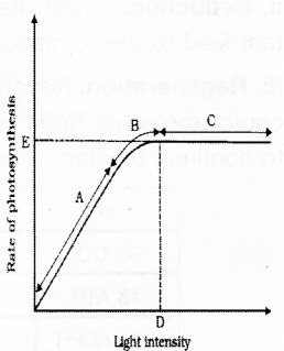 Plus One Botany Notes Chapter 9 Photosynthesis in Higher Plants 19