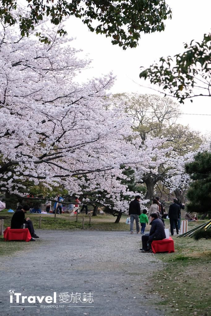 賞櫻景點 福岡城夜櫻 (11)