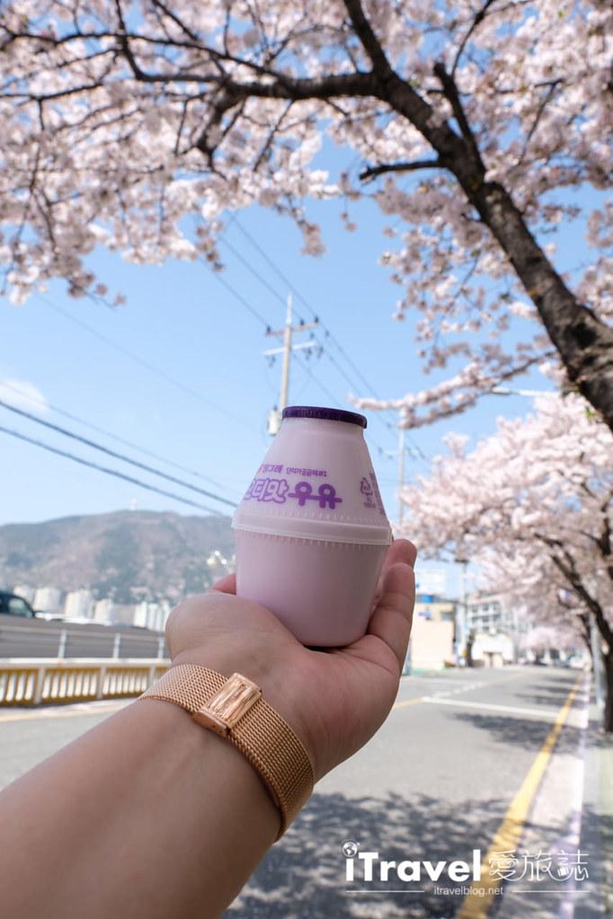 釜山賞櫻景點 東大新洞望洋路 (41)