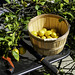 Pruning and Harvesting Lemons