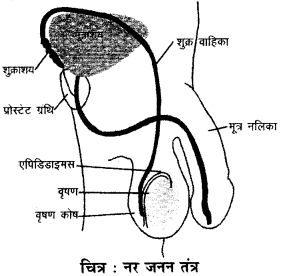 RBSE Solutions for Class 9 Science Chapter 8 Vital activities of living 7