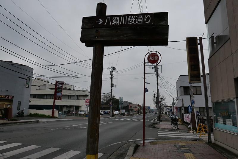 八瀬川桜まつり Yasegawa Cherry blossoms festival 01