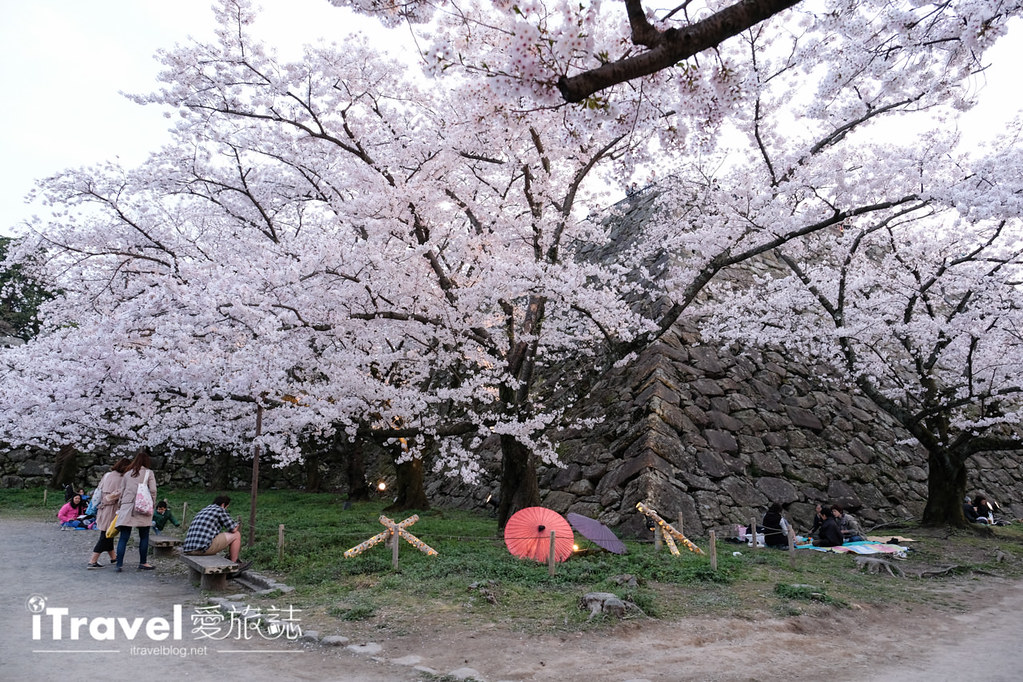 賞櫻景點 福岡城夜櫻 (16)