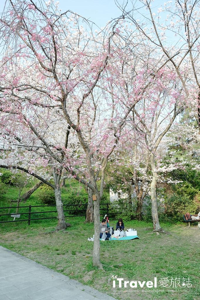 福岡賞櫻景點 西公園Nishi Park (32)
