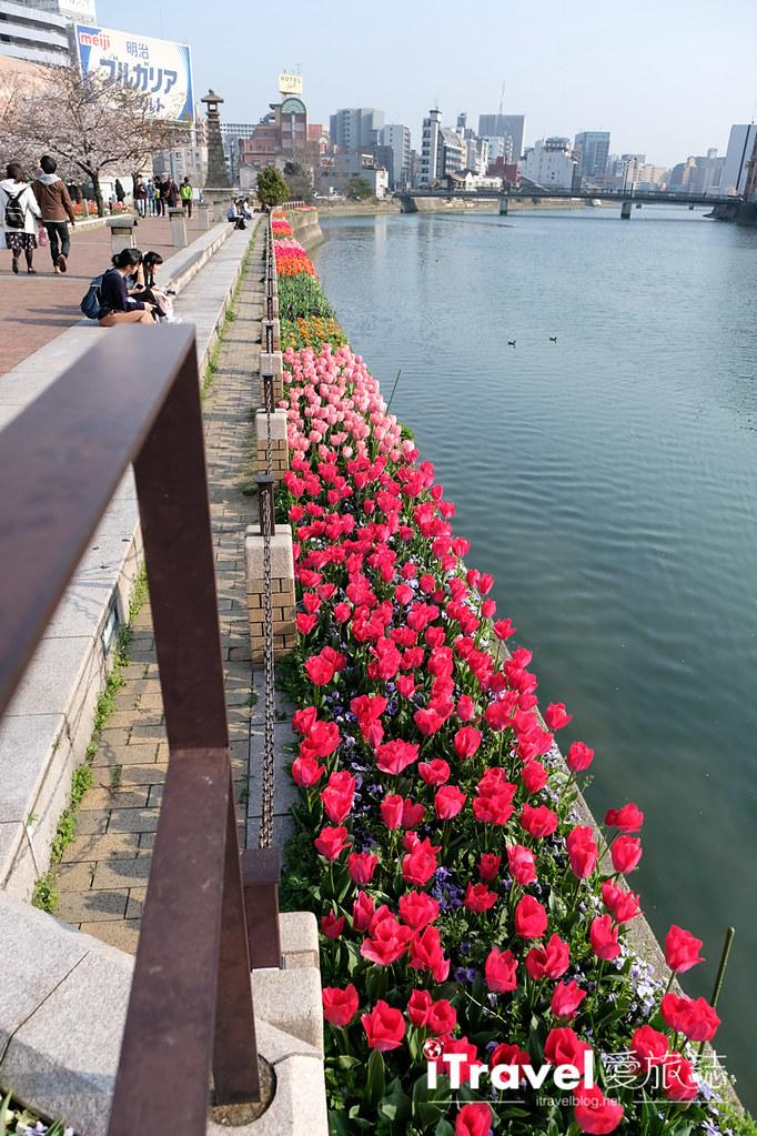 福岡賞櫻景點 博多清流公園 (12)