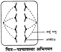 RBSE Solutions for Class 9 Science Chapter 6 Structure of living 7