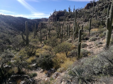 Milgrosa Canyon