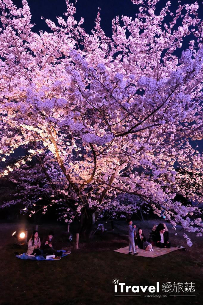 賞櫻景點 福岡城夜櫻 (51)