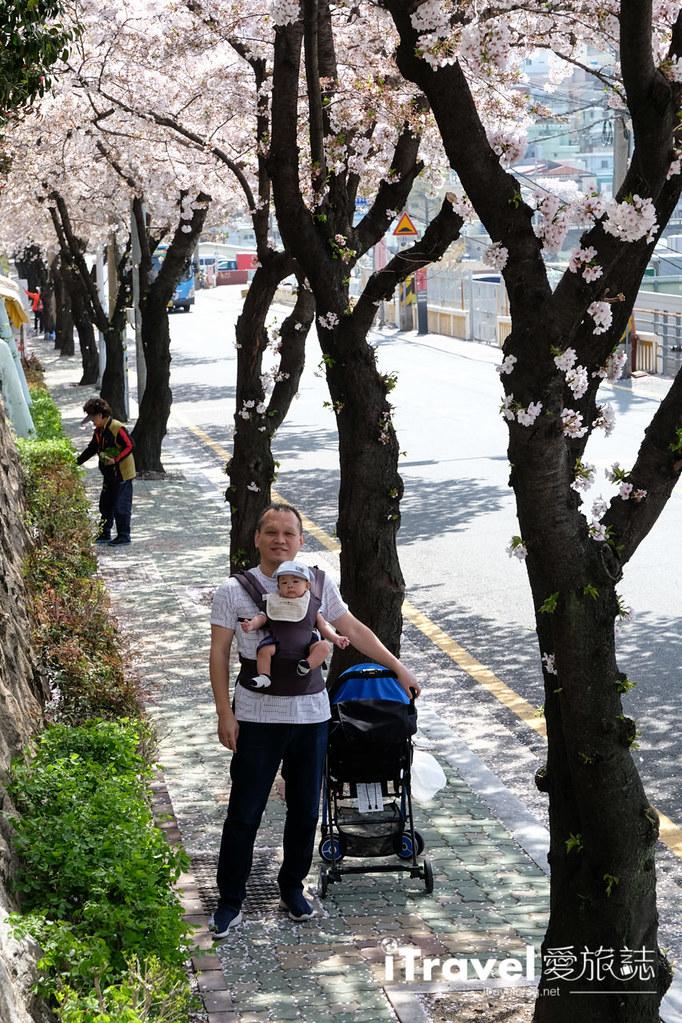 釜山賞櫻景點 東大新洞望洋路 (30)
