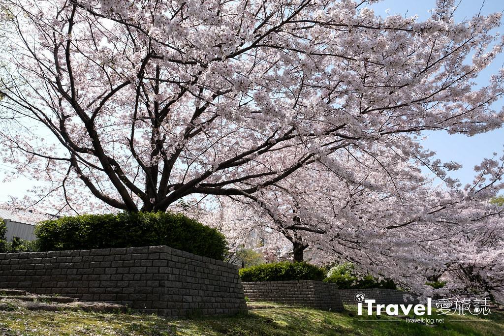 福岡賞櫻景點 美野島南公園 (34)