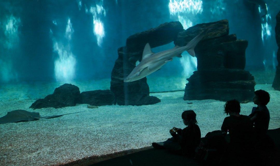 Vasca degli squali, Acquario di Genova