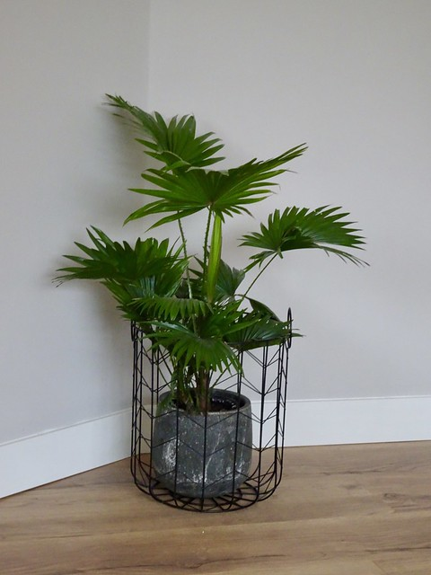 Plant in draadmand