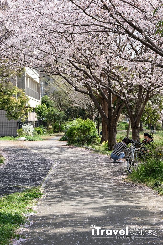 福岡賞櫻景點 美野島南公園 (6)
