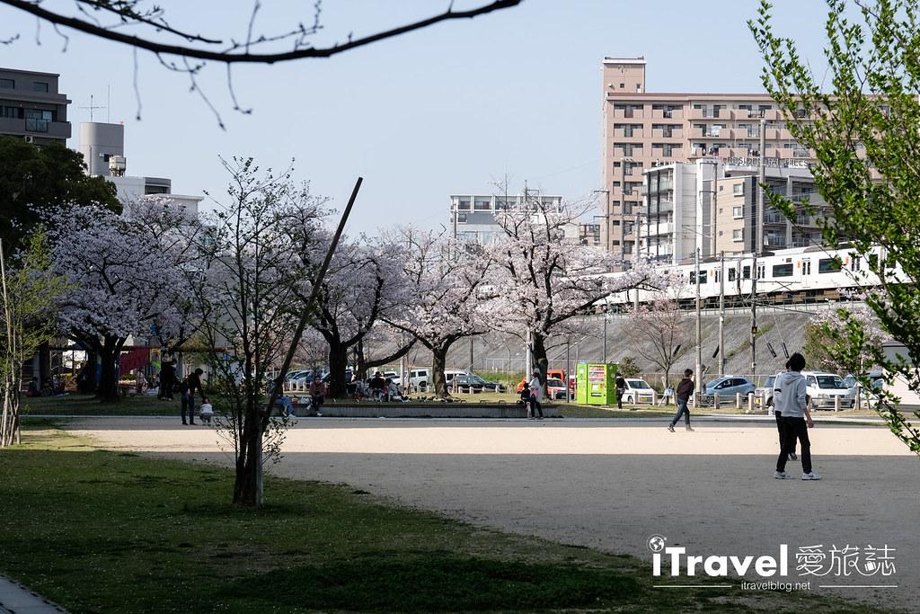 福岡賞櫻景點 美野島公園、東領公園 (28)
