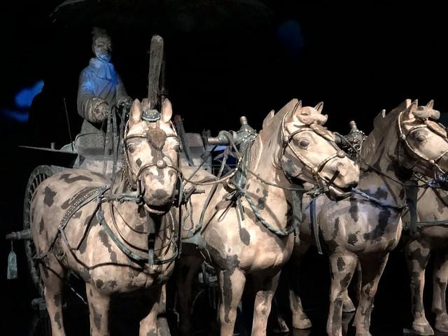 Terracotta Warriors, Te Papa Museum