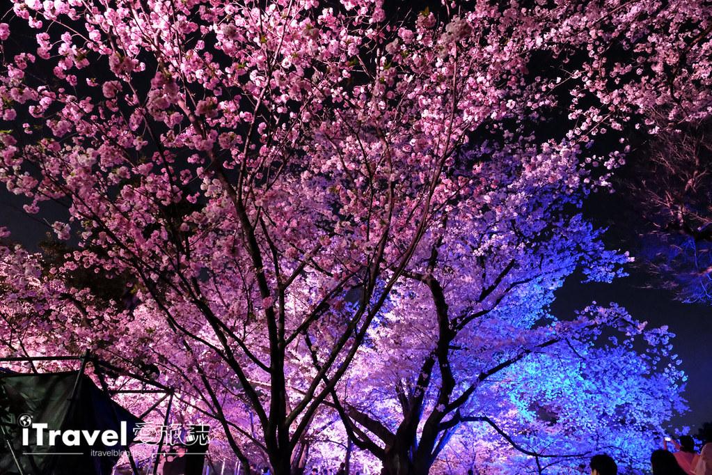 賞櫻景點 福岡城夜櫻 (62)