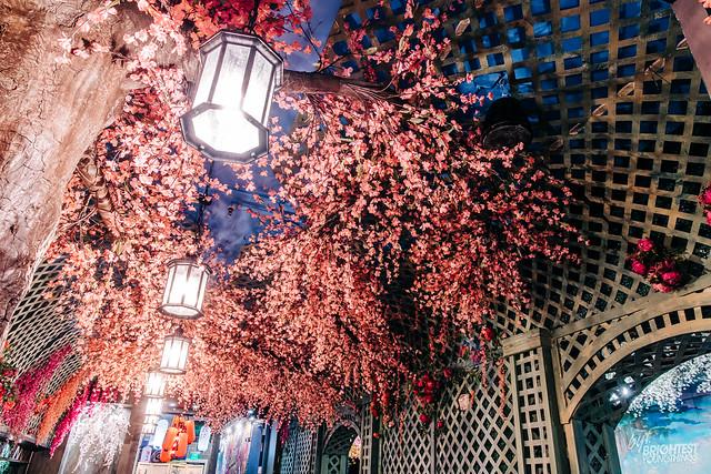 Cherry Blossom Bar 2019-23