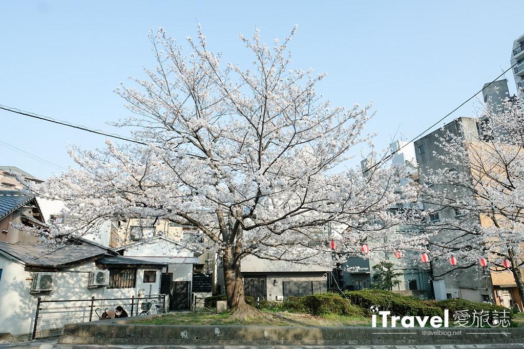 福岡賞櫻景點 西公園Nishi Park (11)