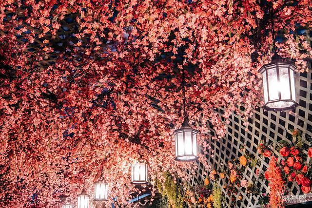 Cherry Blossom Bar 2019-20