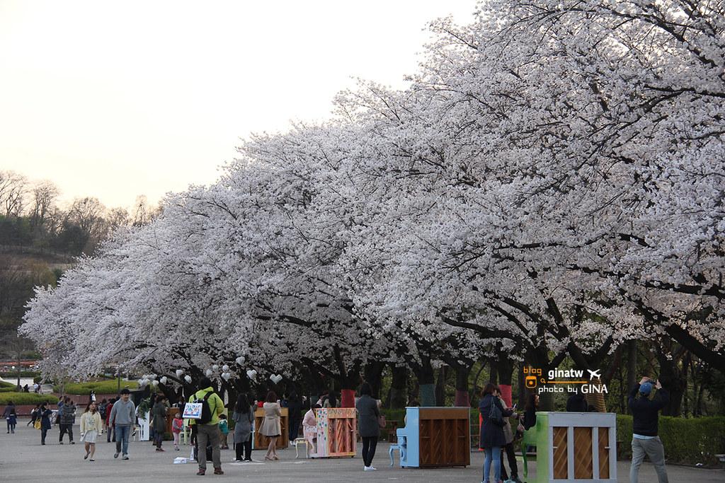 【首爾大公園】韓國賞櫻|果川市滿滿的櫻花路。超好拍超美! – GINA環球旅行生活開箱