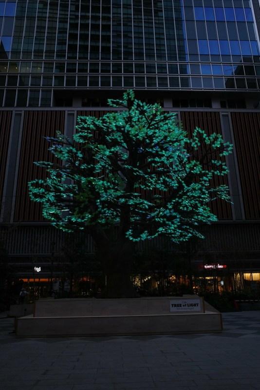 The Tree of Light - 灯桜 - 02 RICOH GR 96