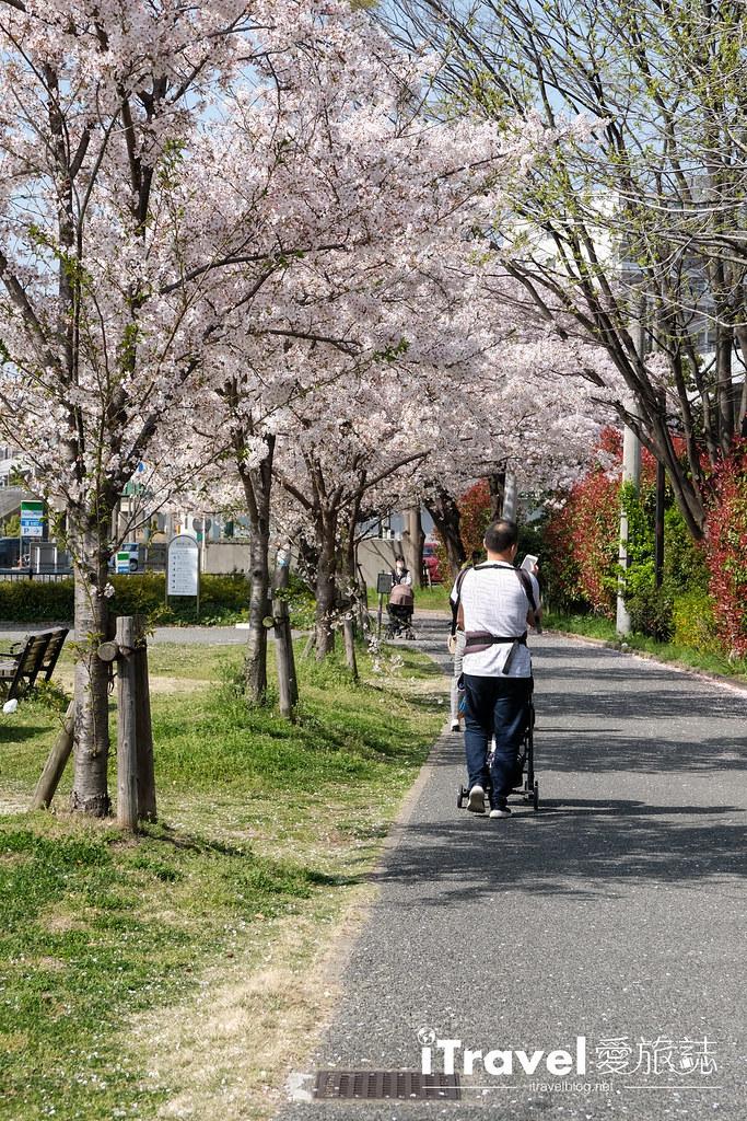 福岡賞櫻景點 美野島公園、東領公園 (17)