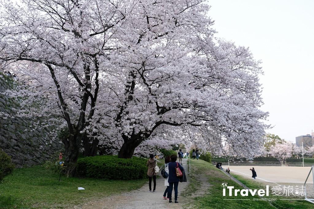 福岡賞櫻景點 福岡城 (44)