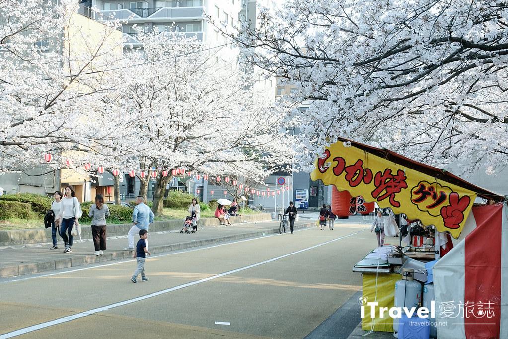 福岡賞櫻景點 西公園Nishi Park (14)