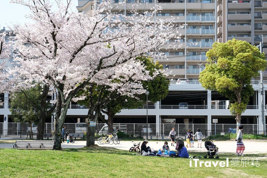 福岡賞櫻景點 美野島公園、東領公園 (14)